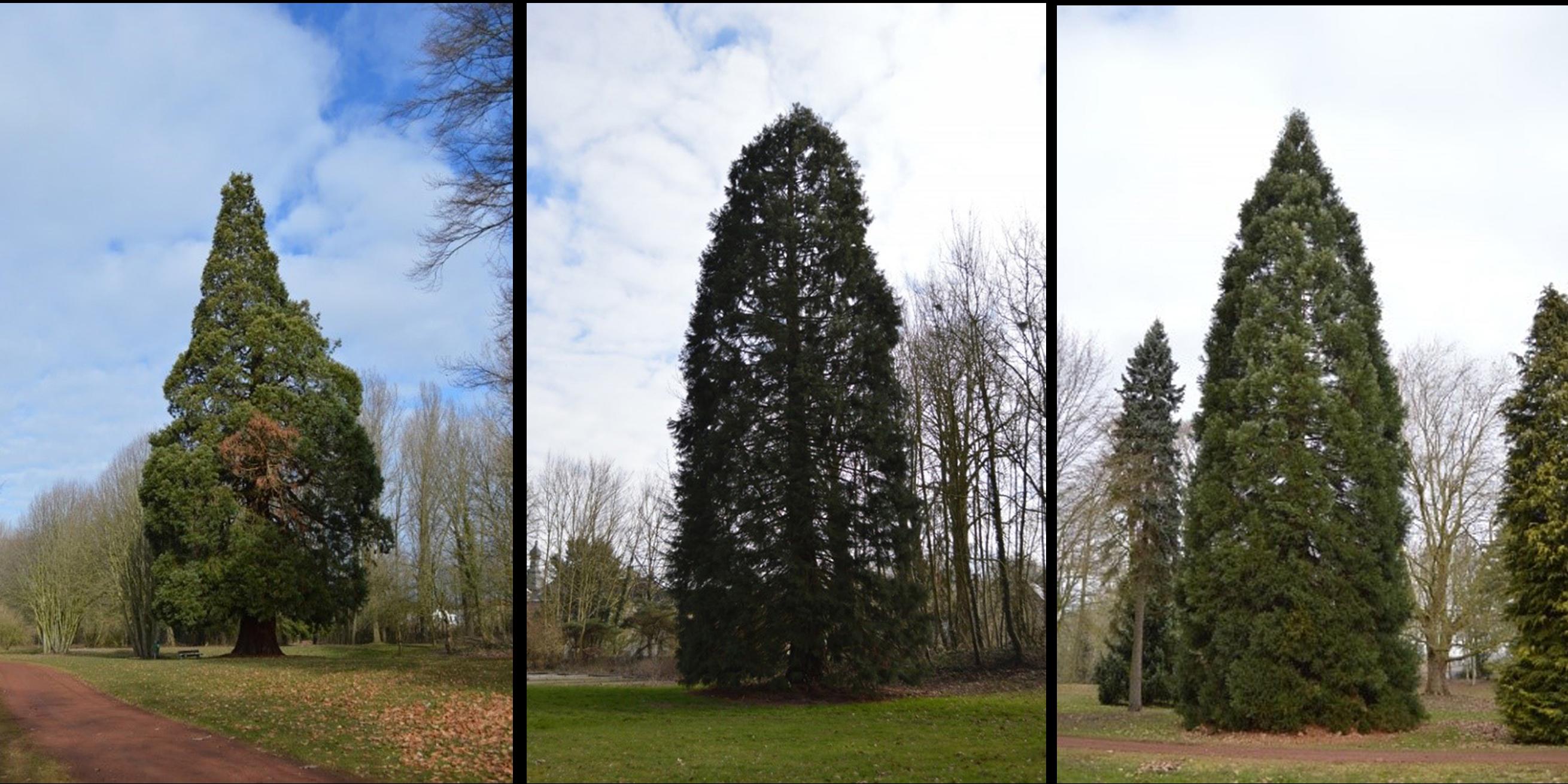 datant vieux arbres sites de mariage de rencontres internationales